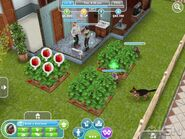 First-details-on-the-sims-freeplay-20111123115121869 640w