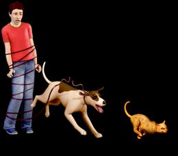 Hund&katt