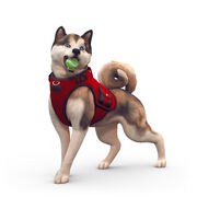 The Sims 4 Cats & Dogs Render 09