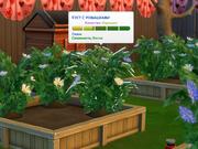 Созревание (Садоводство)