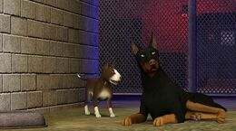 Sims3Pets1