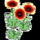Wildflower Indian Blanket
