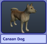 Canaan Dog (Sims 2)