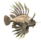 Mountain Lionfish