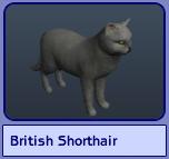 British Shorthair (Sims 2)