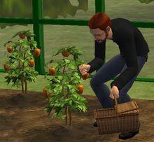 Jardinage Sims 2