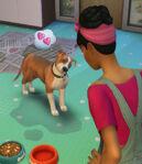 Les Sims 4 Chiens et Chats 09