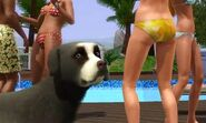 The sims 3 Dog 1