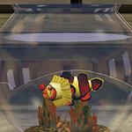 Рыба-лицедей в аквариуме