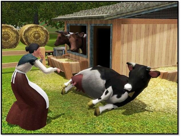File:Cow store content 4.jpg
