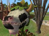 Plante vache