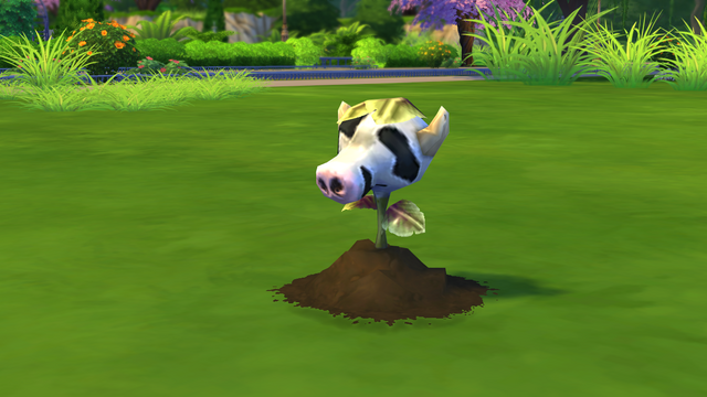 File:Baby Cowplant.png
