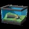 Лесная лягушка с пятнами