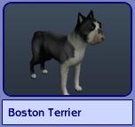Boston Terrier (Sims 2)