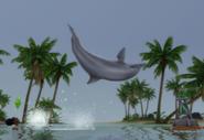 DolphinBackflip