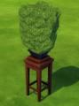 Bonsai Tree.png