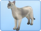 File:Breed25.png