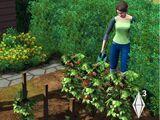 Садоводство (The Sims 3)