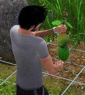 Végébébé Les Sims 3 cueilli