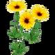 Wildflower Black Eyed Susan