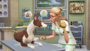 TS4 Cats and Dogs 15
