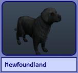 Newfoundland (Sims 2)