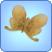 Zephyr Metalmark Butterfly