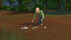 TS4OR Collecting Insects