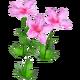 Wildflower Azalea