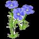 Wildflower Blue Flax