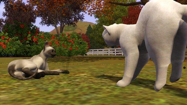 File:CatsFighting.jpg