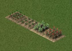 Cultivos Animales a raudales