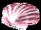 Морской гребешок (розовый)