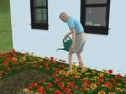 Herbert Eldresen som vanner planter