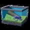 Баклажанная лягушка