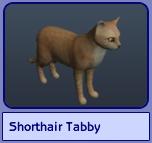 Shorthair Tabby (Sims 2)