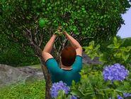 Chris Steel Lime Tree
