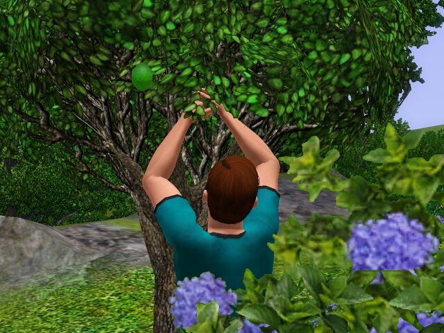 File:Chris Steel Lime Tree.jpg