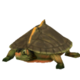 Indian Roof Turtle