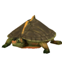 File:Indian Roof Turtle.png