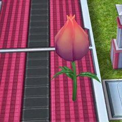 Flor de hada rosa