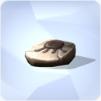 Pis fossilisé