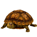 File:Eastern Box Turtle.png