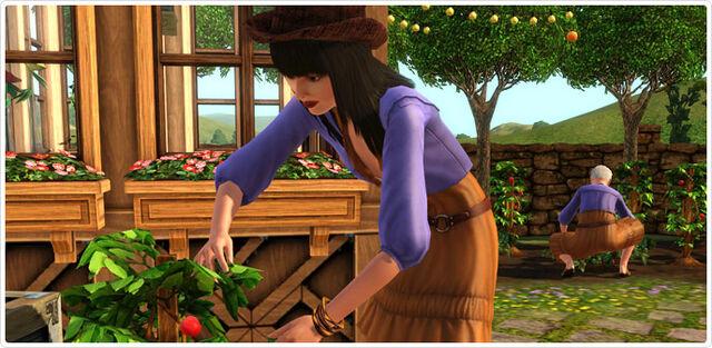 File:Bohemian Garden screenshot 1.jpg