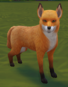 TS4 Fox