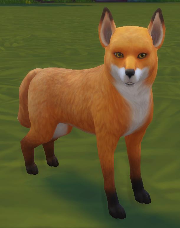 Newground adult dating sim fox