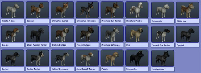 File:SmallDogs.jpg