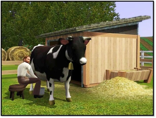 File:Cow store content 1.jpg