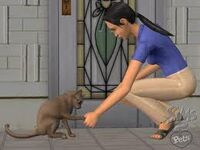 Hilse på katt