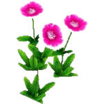 File:Wildflower Sweet William.png